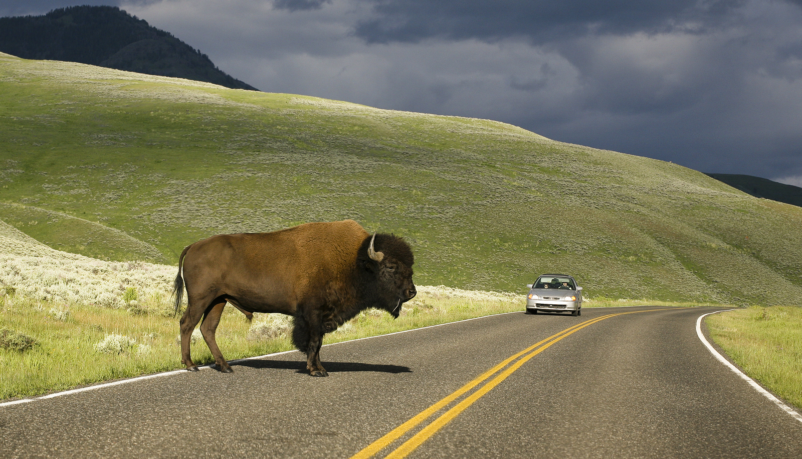 Yellowstone National Park with GyPSy Guide Drive Tour Apps