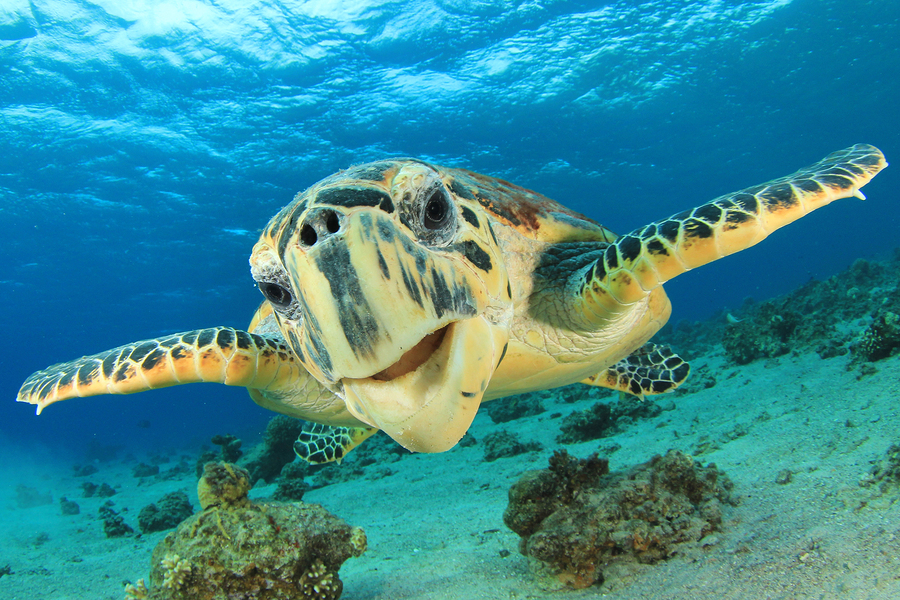 Find turtles with GyPSy Guide Driving Tour App