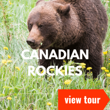 Canadian rockies icon
