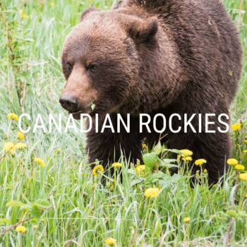 canadian rockies home icon